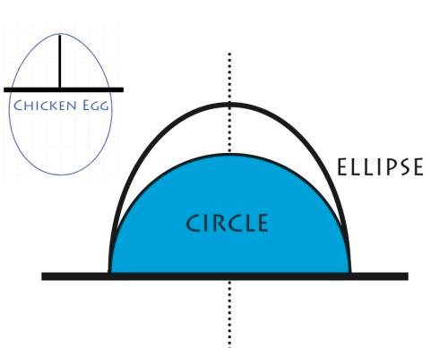 Circle-ellipse-chicken egg