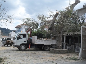 dokos tree