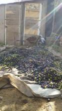 olives day 2 3