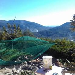 olives land 1