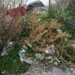 Garbage in the bushes