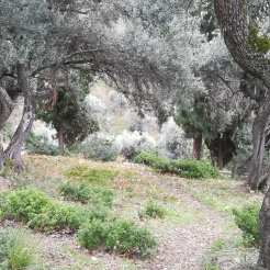The forest behind Agia Maria. Photo from last week.
