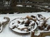 snow 16 020 2021 2