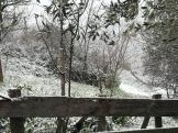 snow 16 2 2021